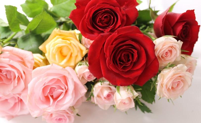 【知らなかった】あなたはご存知? 薔薇をプレゼントする時には、色はもちろん「本数」にも意味があった!