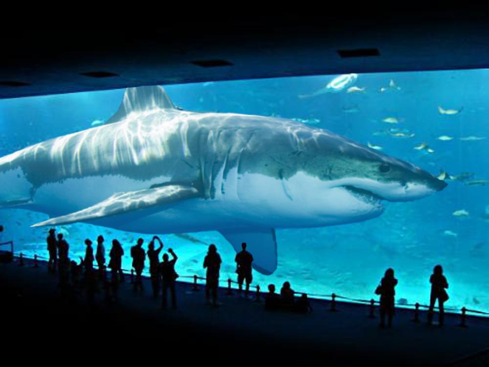【超衝撃】絶滅したはずの超巨大ザメ メガロドンは生存している!?世界が震えた!嘘のような本当の話【閲覧注意】