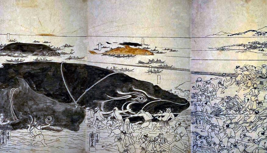 【納得】外国人『クジラ食うとか野蛮だろ!反捕鯨!』日本の外交官『これを見ても?』→ 外国人『マジかよ…日本人は捕鯨して良いかも』