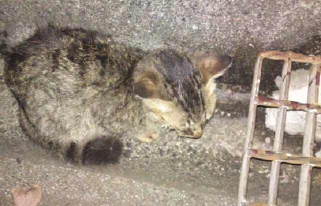 【男と猫のエピソード】~汚い猫を見つけたので虐/待することにした~
