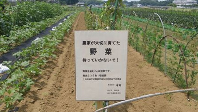 【制裁】マンション住人に畑の作物を強奪されて警察に通報した。泥一家『たかが野菜くらい』⇒ 被害にあってた地元組が激怒して・・・
