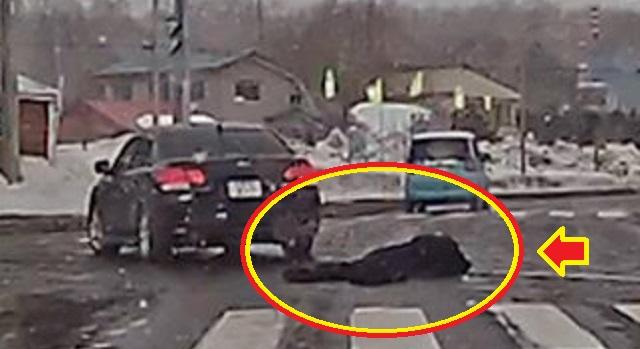 【衝撃】大学生を車で轢きコロした。その大学生は俺の車の前に飛び出し、ボンネットにぶち当たって吹っ飛んでいった。その姿を見て「終わった」と思っ...
