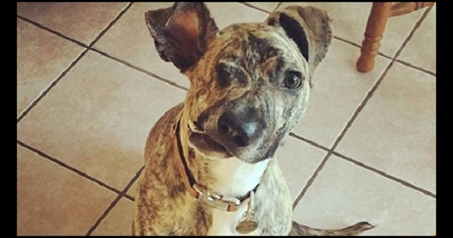 【感動】何度も殴られ顔が変形してしまった犬。彼は、翌日に安楽死処分が決まっていた。ところが・・・