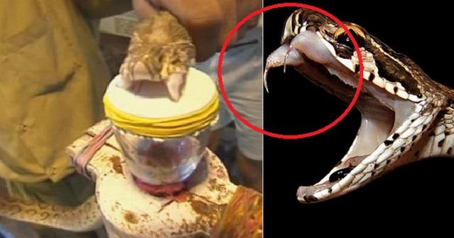 【寒気が止まらない】ヘビの猛毒を人間の血に垂らしたら、目を疑うような結果に・・・(※動画あり)