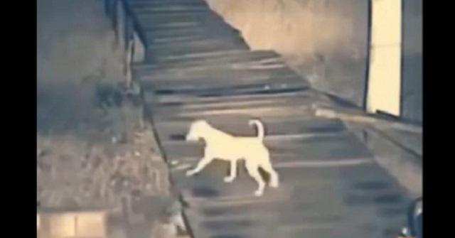 【戦慄映像】番犬が急にいなくなった!…監視カメラを確認すると、犬を襲った『恐ろしいヤツ』が映っていた!【閲覧注意】