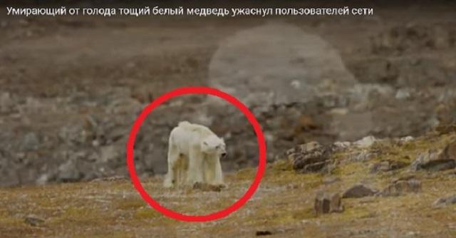 【衝撃】この1分間の衝撃的な動画をご覧ください!!人類は地球に何をしてきたのか・・・