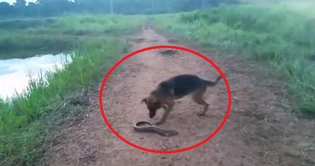 【衝撃映像】巨大な電気ウナギに噛みついた犬が・・・まさかの悲惨な末路とは…!?