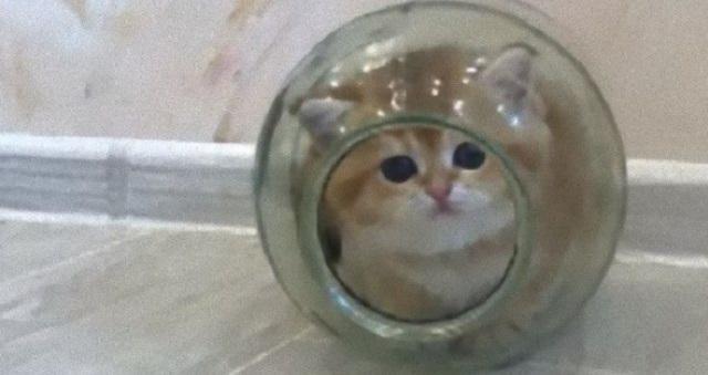 【癒される】ガラス瓶にすっぽりと収まった仔猫wwwこれ、じつは遊んでいるわけではなく・・・