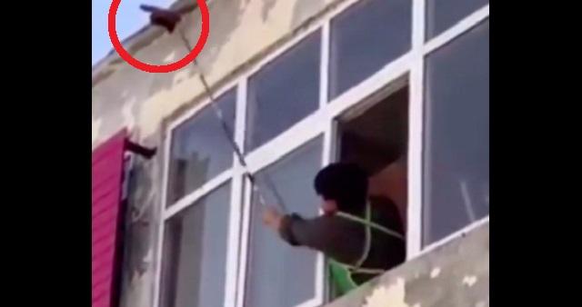 【悲劇】窓の外に見つけたハチの巣を、棒で叩き落とした結果・・・悲惨すぎる結末に!!