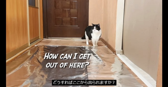 【実験動画】猫の進路にアルミホイルを敷き詰めたらどうなる?→ 反応を見てみた結果・・・