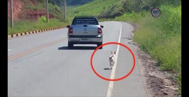 白昼堂々ペットの犬を置き去りにする飼い主!!その様子を撮影した動画が拡散した結果・・・