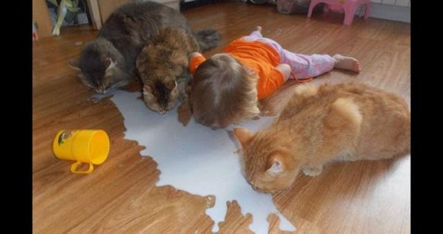【衝撃画像】子供をペットの犬や猫と一緒にして目を離したら…すごいことになっていたwww衝撃画像12選