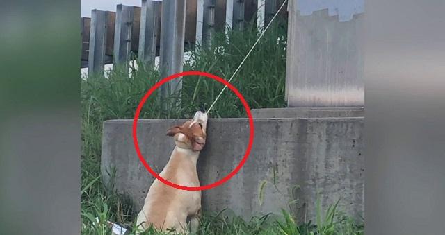 【憤怒】九死に一生!!ケーブルで陸橋に縛られた犬が・・・