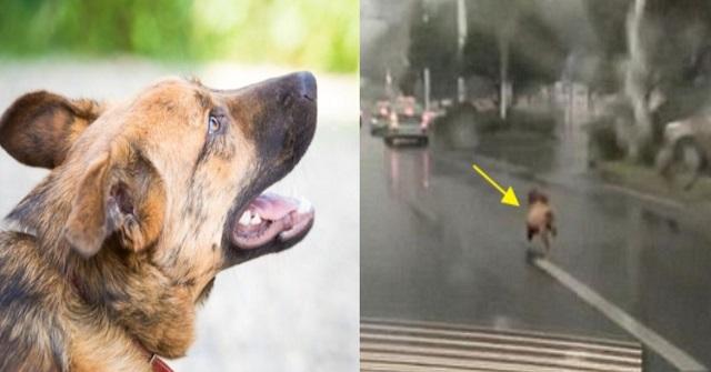【胸糞注意】捨てられたとは知らず飼い主を追いかけ続けた愛犬。すると別の車に轢かれて・・・
