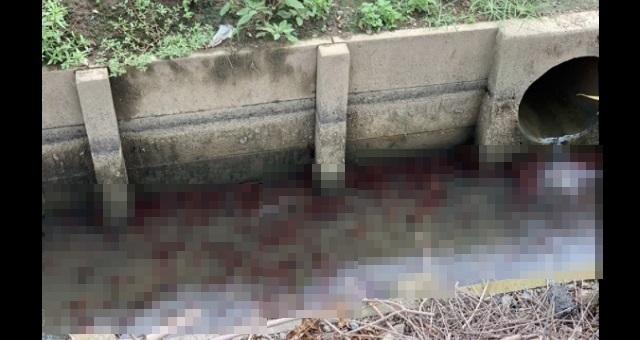 """【驚愕】水の中に赤い影がウジャウジャ・・・""""アイツ""""が埼玉で大量発生の謎「ゾッとしました」"""