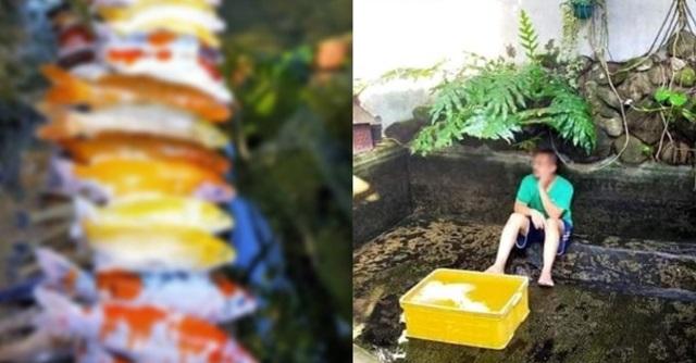 【唖然】池掃除をする際に鯉50匹を全て地上に横たわらせ全滅させてしまったアルバイト → 結果・・・