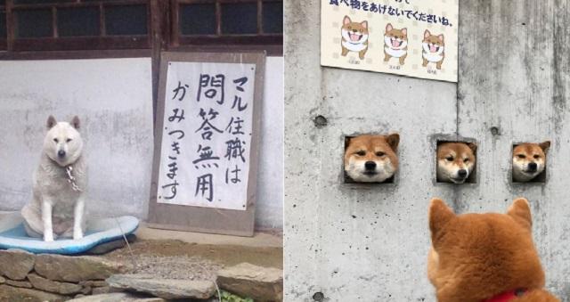 【腹筋崩壊】なにこの注意書き!?貼紙を見て思わず爆笑!犬&猫のおもしろ画像13選