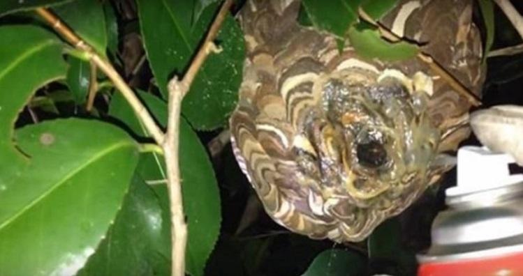 【驚愕】こんな方法があったとは!!スズメバチの巣がスプレーボンドを使って駆除できる!?その真相は・・・(※動画あり)