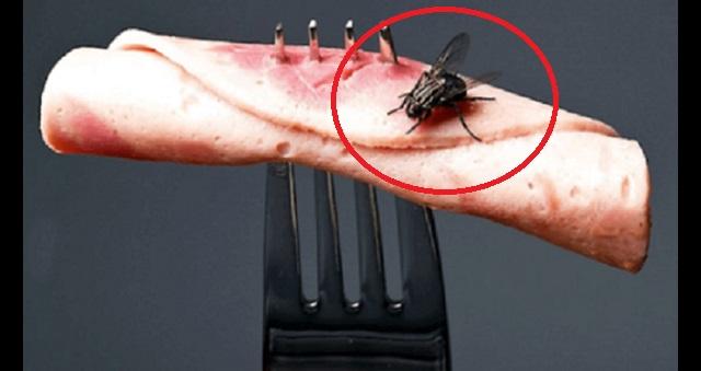 【閲覧注意】ハエはゴキブリより2倍のバイ菌持ち!その事実を裏付ける、おぞましいハエの生態とは・・・