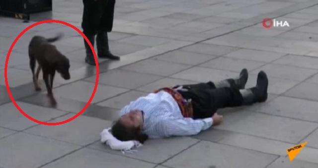 【衝撃の展開】負傷して横たわる演技をしていた俳優。そこへ一匹の野良犬が近づいてきて・・・(※動画あり)