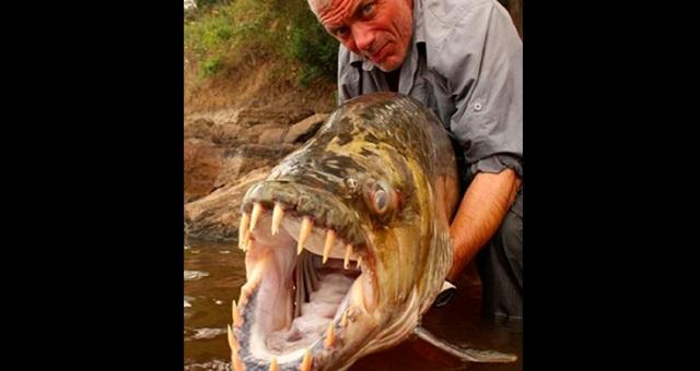 【衝撃】魚を超越したモンスター!怖すぎる巨大殺人魚7選!