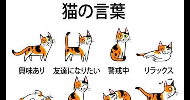 【朗報】これでアナタも猫の言葉や感情を理解できる!?猫の気持ちを読み取る方法とは・・・(※動画あり)