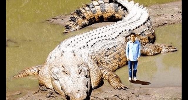 【驚愕】スケールの大きさに絶句する…!世界の巨大生物10選